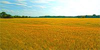 Simkea-Ortschaft:Felder (Besitzer: Servetia) (Besitzer: Servetia)