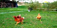 Simkea-Ortschaft:Hühnerpferch
