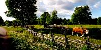 Simkea-Ortschaft:Kuhwiese