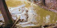 Simkea-Ortschaft:Schlammloch