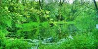 Simkea-Ortschaft:Tümpel